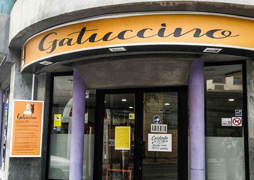 Gatuccino, el primer Cat Café de Las Palmas